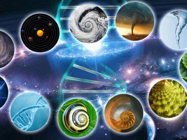 Spirales-dans-la-nature