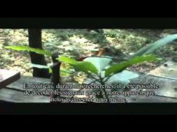 Les plantes chantantes de Damanhur